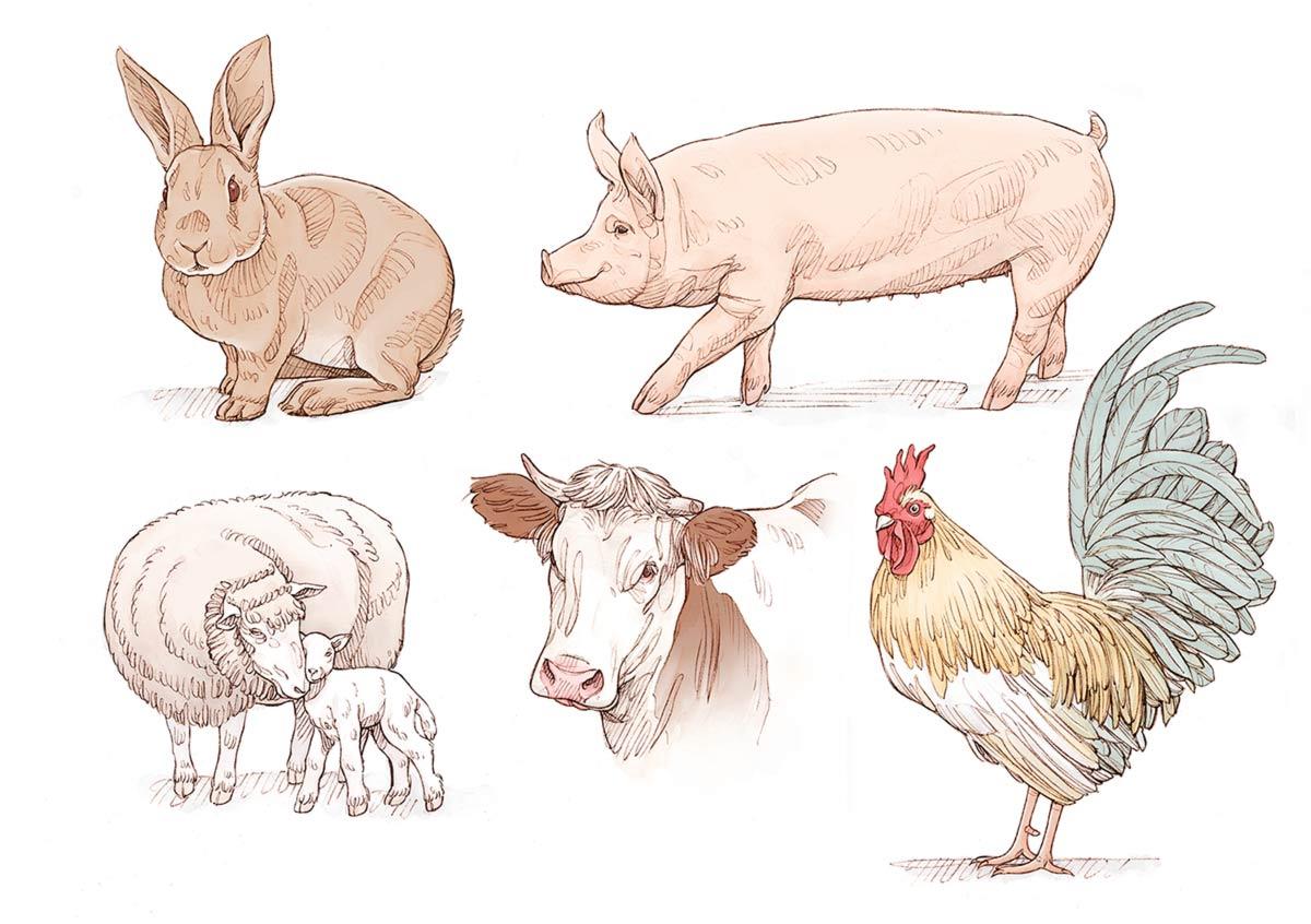 Déclinaisons d'animaux de ferme